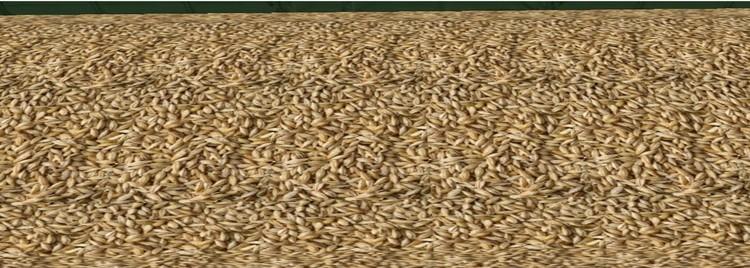 Barley1.thumb.jpg.60ae9709549d2d7ef1d26e309b14f036.jpg